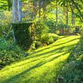 Garden Path by Tom Singleton