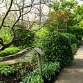 Garden Paths by Allen Nice-Webb
