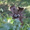 Garden Peek-a-boo by William Thomas