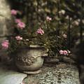 Garden Planter by Jessica Jenney