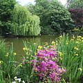 Garden Pond Near Buckingham Palace  by Irina Sztukowski