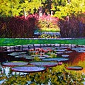 Garden Ponds - Tower Grove Park by John Lautermilch