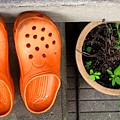Garden Shoes by Ian  MacDonald