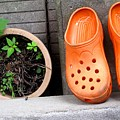 Garden Shoes Waiting by Ian  MacDonald
