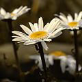 Garden Smiles by Michael Eingle
