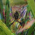 Garden Spider - Fractals by Ericamaxine Price