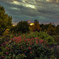 Garden Sunset by Kevin Argue