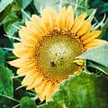 Garden Treasure  by Jeff Klingler