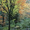 Garden Trees by Sara Stevenson