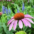 Garden Walk by Dave Alexander