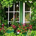 Garden Window by Mark Lemon