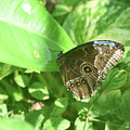 Garden With A Blue Morpho Butterfly With Wings Closed by DejaVu Designs