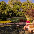 Garden by Zina Stromberg