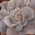 Gardenia  Bloom by Charme Curtin