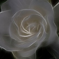 Gardenia Blossom by Deborah Benoit