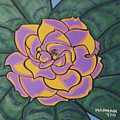 Gardenia by Hannah Lasky