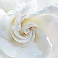 Gardenia Macro by Aimee L Maher ALM GALLERY