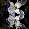 Gardenia by Patti Schulze