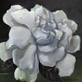 Gardenia Two by Bertica Garcia-Dubus
