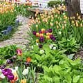 Gardens Of Tulips by Terri Morris