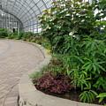 Garfield Park Conservatory by Cindy Kellogg