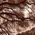 Garin Park Tree 2 by Gwendolyn Barnhart
