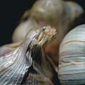 Garlic by Nisah Cheatham