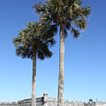 Garrita And Palms At The Fort by Christiane Schulze Art And Photography