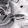 Garter Snake by Wade Clark