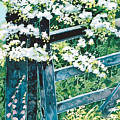 Gate And Blossom by Paula Chapman