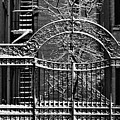 Gate And Snow by Robert Ullmann