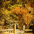 Gates In Fall by Jorgo Photography - Wall Art Gallery