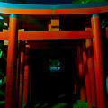 Gates Of Inari by Mumbles and Grumbles