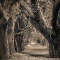 Gateway Through An Avenue Of Live Oaks by Chris Bordeleau