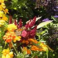 Gathering Nectar  by Paul Pettingell