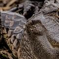 Gator Eye by Bakedography Art