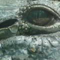 Gator Eye by John Zawacki