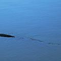 Gator Trail by Kathi Shotwell