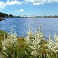 Gaylor Lakes And Queen Anns Lace Eastern Sierra Photo by Kim Hawkins Eastern Sierra Gallery