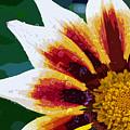 Gazania Flower Design by Nancy Mueller