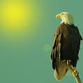 Gazing Sunward by Jeff Swan