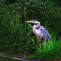 Gbh In The Grass by John Christopher