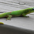 Gecko And Grapes by Pamela Walton
