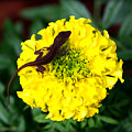 Gecko And Marigold by Susie Weaver