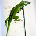 Lizard On Stucco 2 by Angela Rath