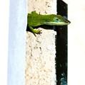 Lizard On Stucco by Angela Rath