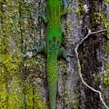 Gecko On Tree Bark by Jackson Kowalski