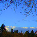 Geese Across The Sky by Lisa Rose Musselwhite