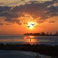 Geese At Sunset by Barbara Treaster