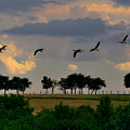 Geese Heading For Home by Martyn Arnold